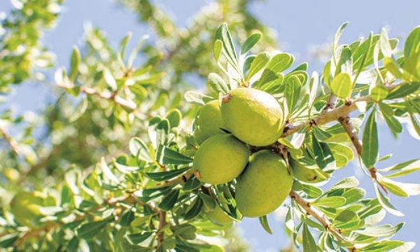 argane oil2