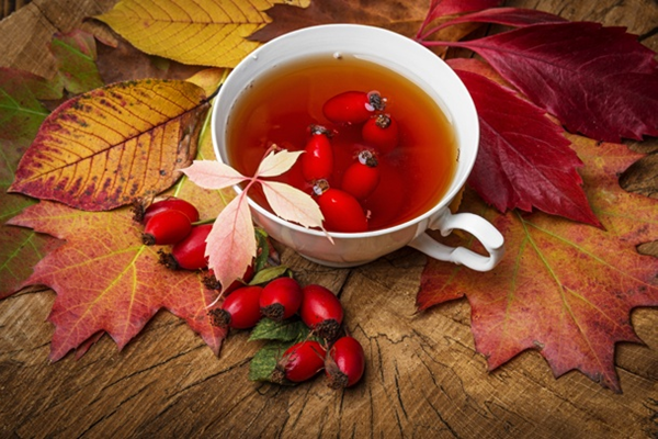 rose hip tea5