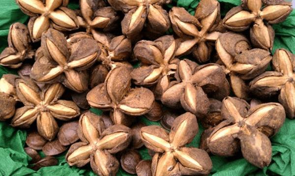 sacha inchi nuts3