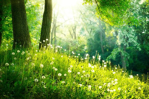 yaruki aroma11