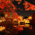 大覚寺の紅葉2018の見ごろ時期・ライトアップや穴場情報まとめ