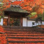 安楽寺の紅葉2016年の見ごろ時期や穴場情報まとめ