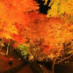北野天満宮の紅葉2016の見ごろ時期・ライトアップや穴場情報まとめ