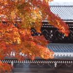南禅寺の紅葉2016年の見ごろ時期や穴場情報まとめ