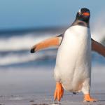 ペンギン系女子の特徴7つと絆が深まる付き合い方