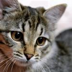 【夢占い】猫が出てくる夢が暗示する7つの意味や解釈まとめ