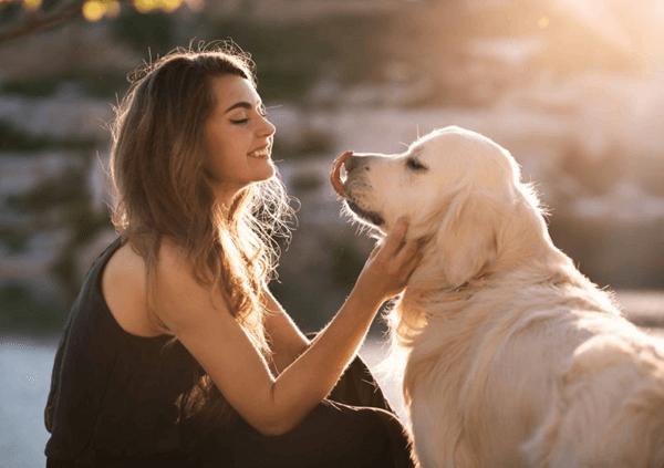 夢 占い 犬 を 飼う
